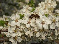 Moje kamarátky včielky 1