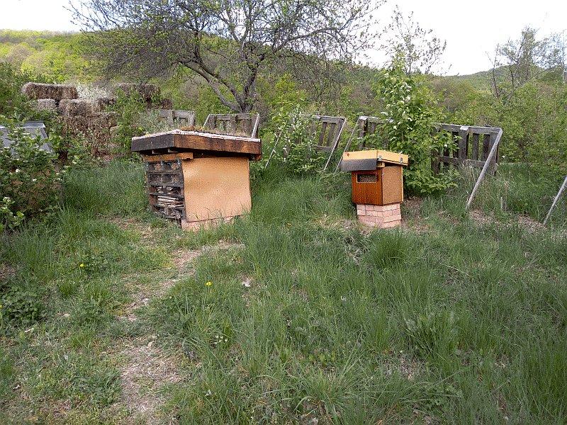 Moje kamarátky včielky 4